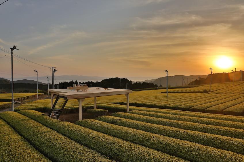 Show item 2 of 3. Tea Tourism : Outdoor tea ceremony experience @ Chatou