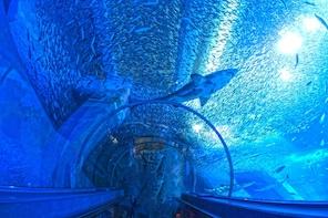 Mother Farm & Hakkeijima Aquarium Private Tour with Driver