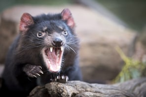 Full-Day Port Arthur and Tassie Devils Active Day Tour