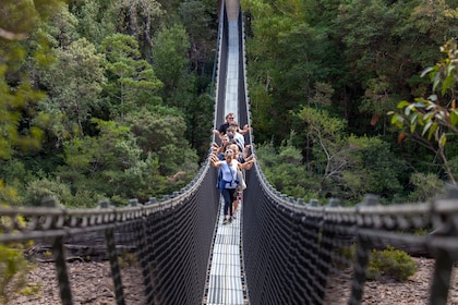 Swinging Bridge Walk - Tahune Airwalk Site.jpg