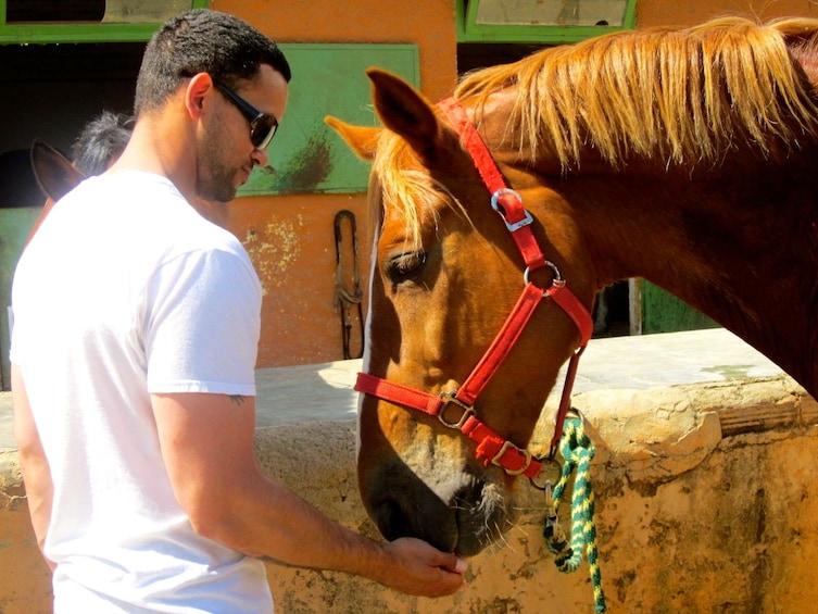 Foto 3 von 10 laden Horseback Riding Experience in Collserola Park-Horse tour