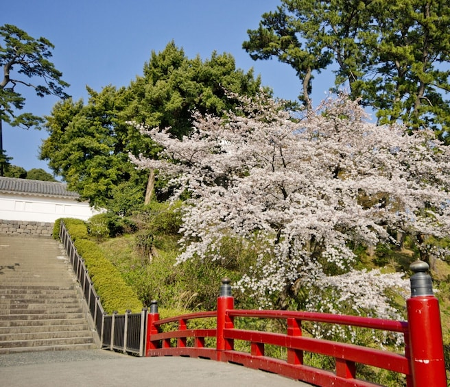 Show item 5 of 5. Odawara & Hakone: 1 day Private Tour with Driver