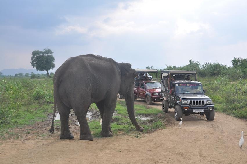 Show item 3 of 9. Udawalawe National Park Safari from Unawatuna