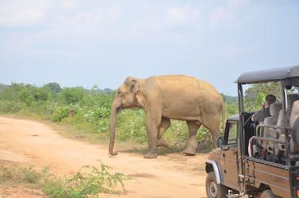 Udawalawe National Park Safari from Unawatuna