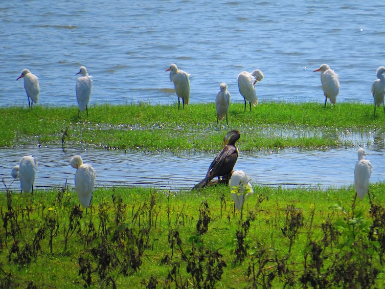 Show item 2 of 3. Yala National Park Safari from Talpe (Private Day Tour)