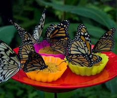 Pilpintuwasi Butterfly Farm
