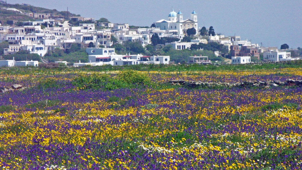 Field of wildflowers with city in the distance in Tinos