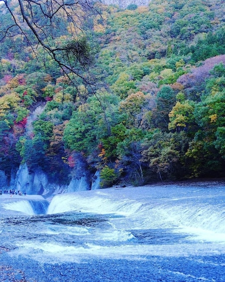 Show item 4 of 6. Gunma: Lavender Park & Waterfall 1 day Private Tour