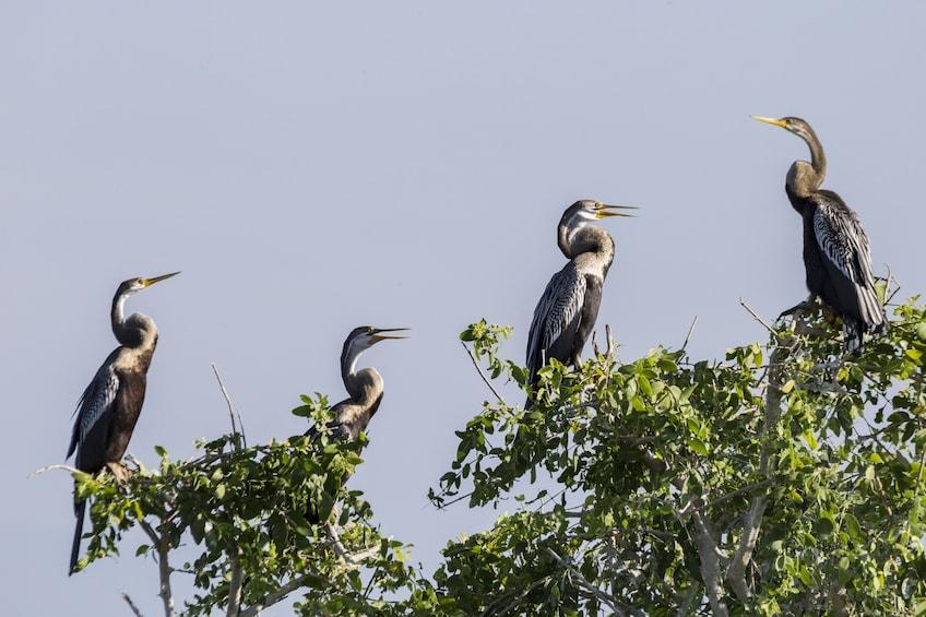 Show item 6 of 6. Bundala National Park Safari from Unawatuna
