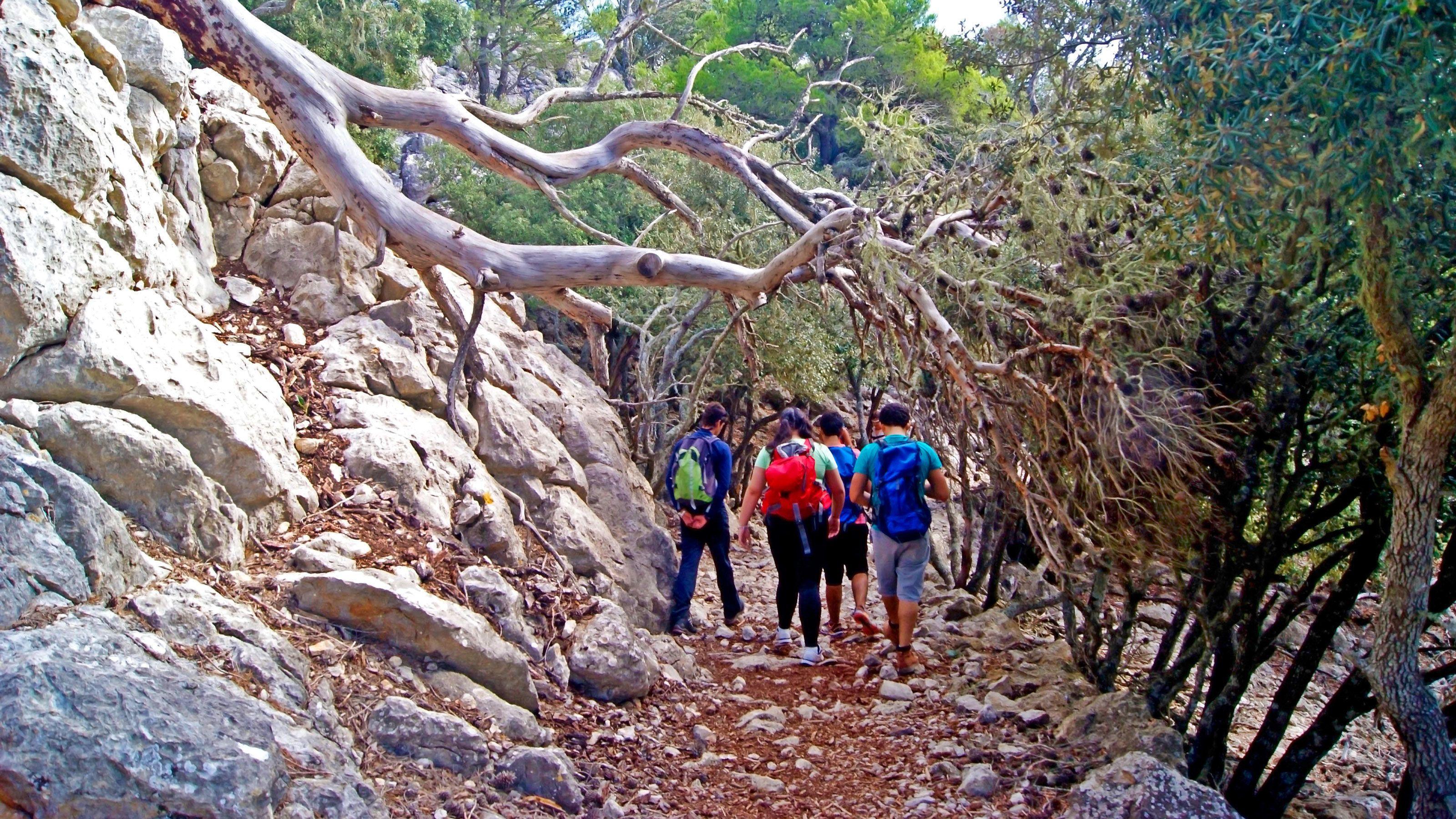 Hikers walk under a fallen tree along a dirt path in Mallorca