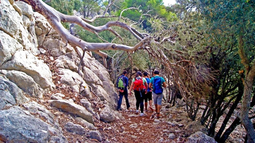 Foto 1 von 5 laden Hikers walk under a fallen tree along a dirt path in Mallorca