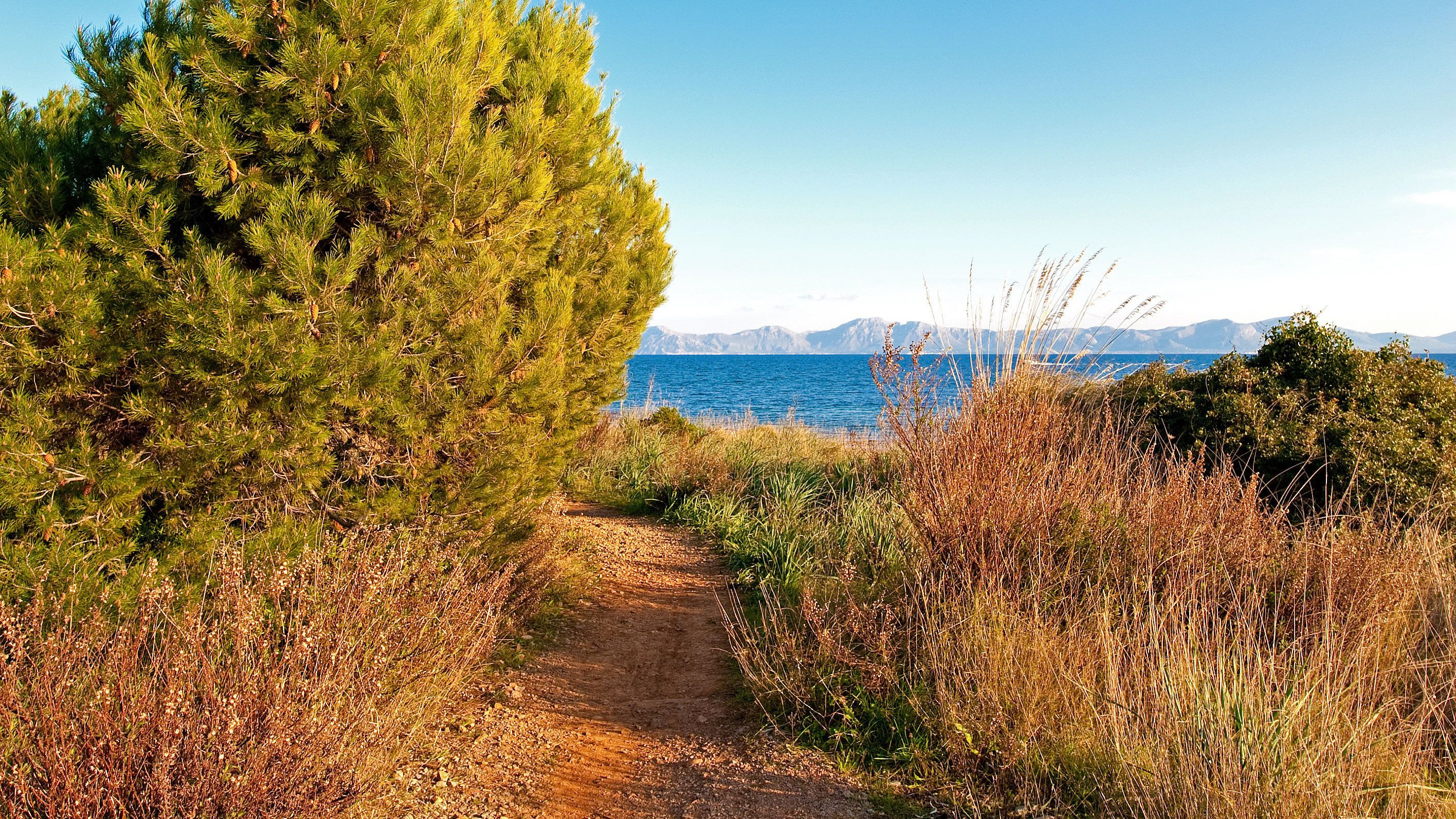 Dirt path leading to a body of water in Mallorca