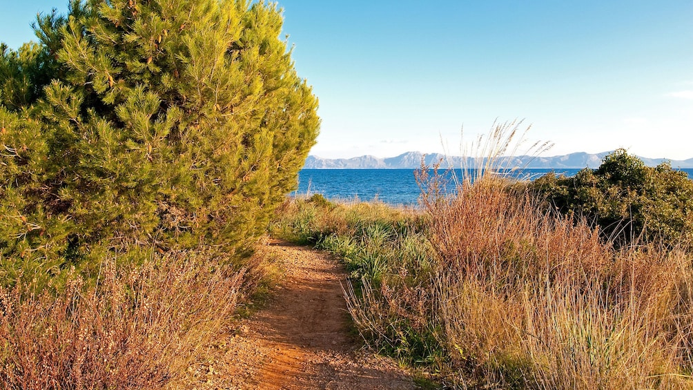 Foto 4 von 5 laden Dirt path leading to a body of water in Mallorca