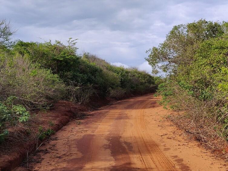 Show item 3 of 6. Bundala National Park Safari from Talpe (Private Day Tour)