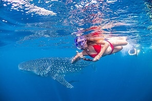 Full-Day Whale Sharks Swimming Experience on Ningaloo Reef