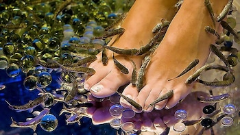 20-Minutes Natural Pedicure with Exotic Fish