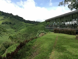 2 Days 1 Night Cameron Highlands, Mossy Forest By 4x4