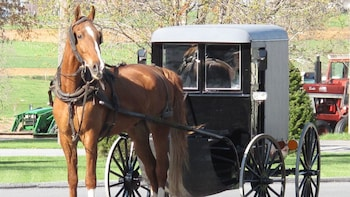 Private Lancaster & Amish Country Tour