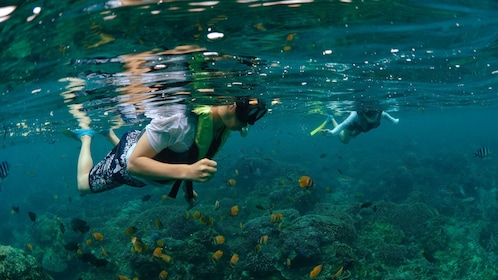 Snorkelers in the water in Bali