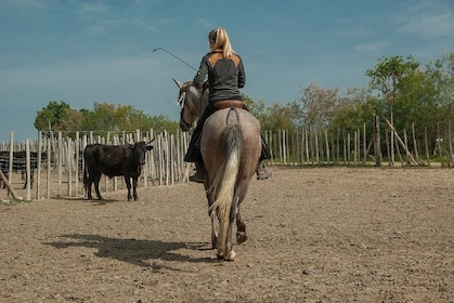 Private Traditions of the Camargue - 8h