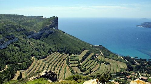 vineyards of Clos Ste-Magdelaine overlook the bay of Cassis in Marseille