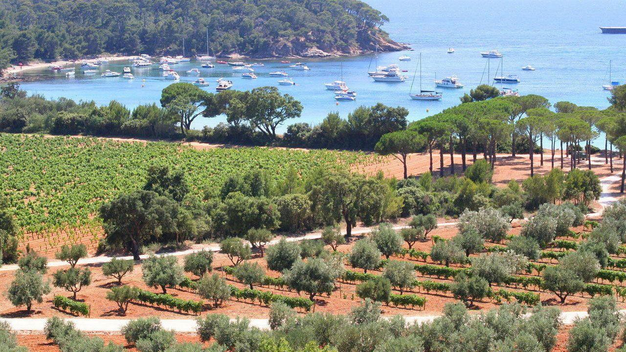 Vineyard near village of Bormes in Marseille