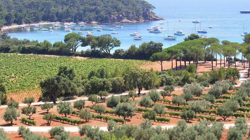 Charger l'élément 1 sur 10. Vineyard near village of Bormes in Marseille