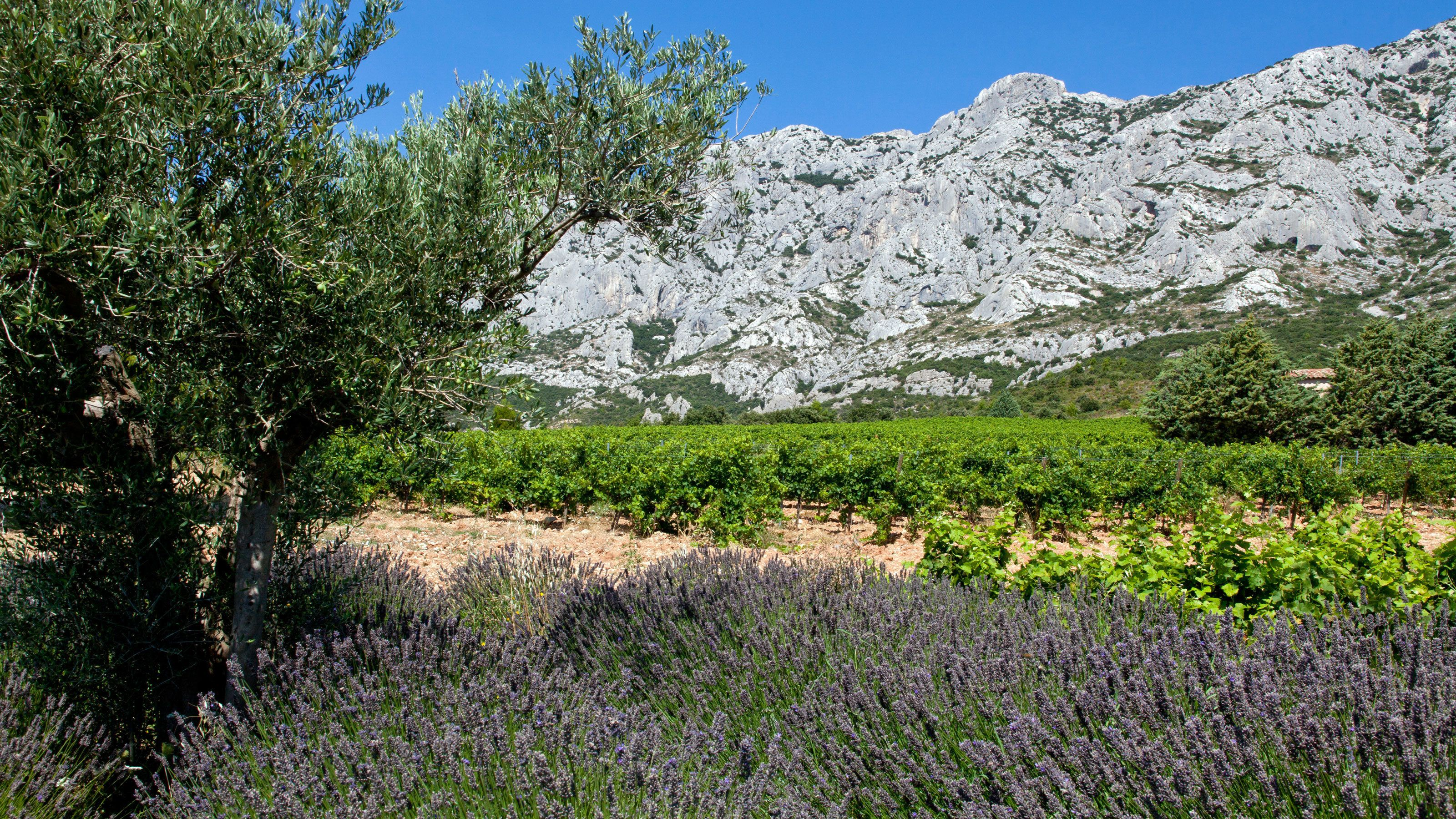 lavender fields and hills at Coteaux d'Aix Marseille