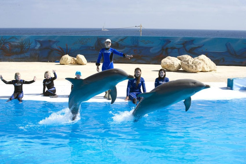 Show item 3 of 10. Swimming with Dolphins at Malta Marine Park