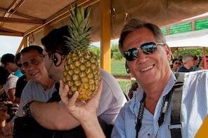 Pineapple Tour