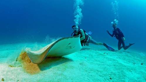 Divers with sting ray in Saint Martin