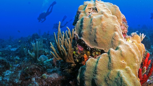 Coral reefs in Saint Martin