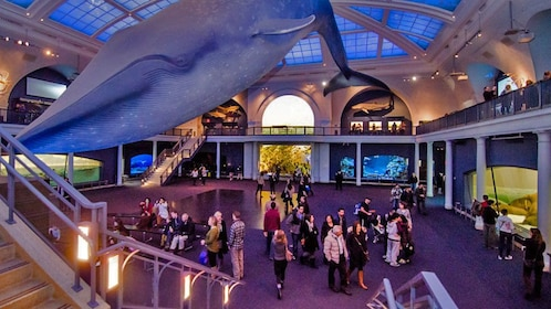 Museum of Natural History Interior in New York
