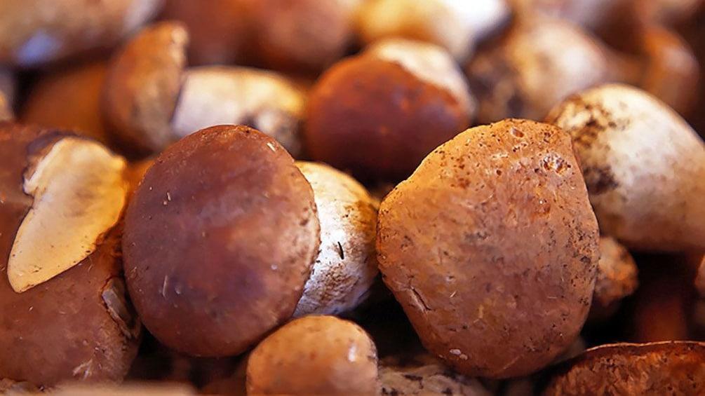 Show item 5 of 7. Mushroom harvest in France