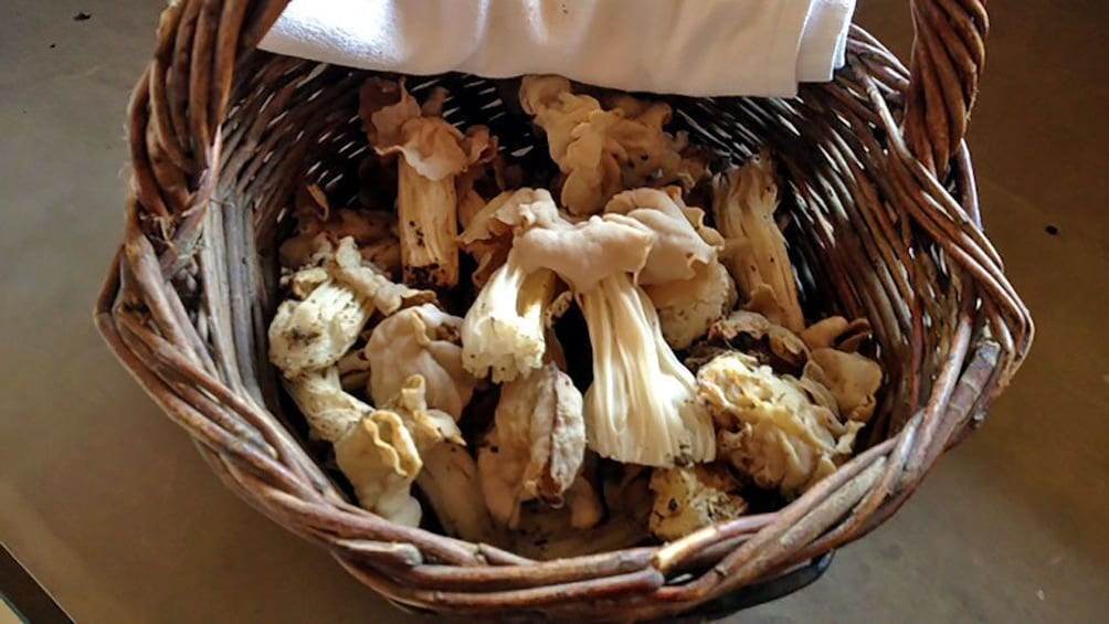 Mushroom basket in France