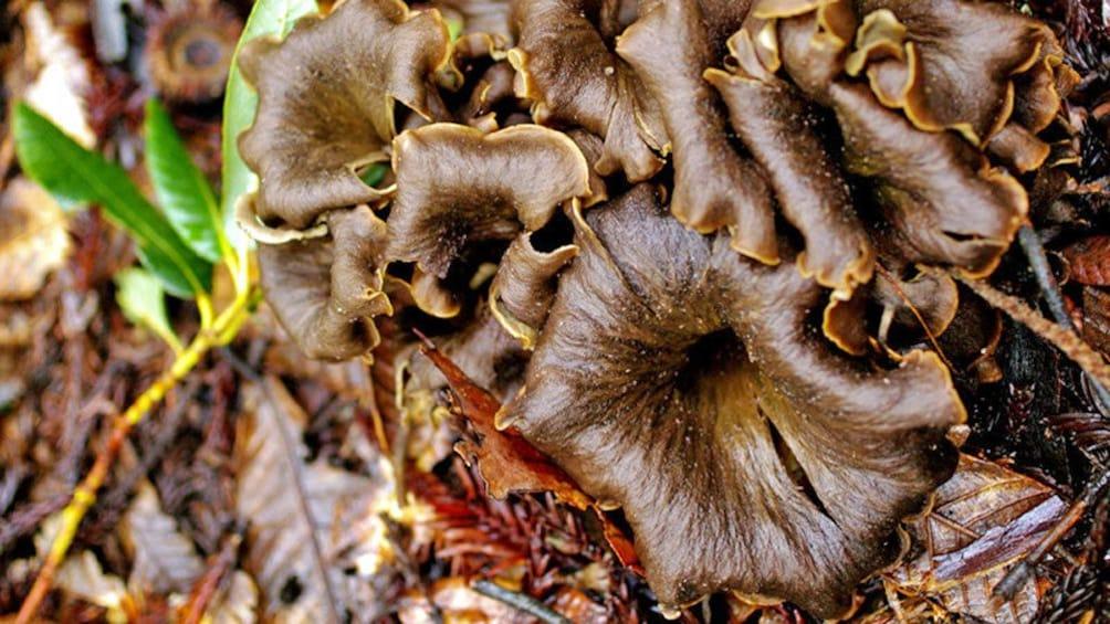 Show item 2 of 7. Mushroom hunting in France