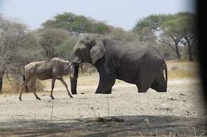 Saadani Safari