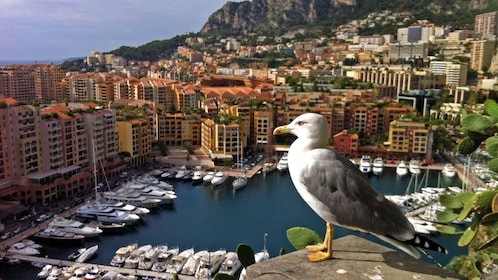 Seagull overlooking a city and harbor in the south of France