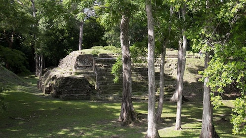 Ruins of a pyramid surrounded by trees in Uaxactun