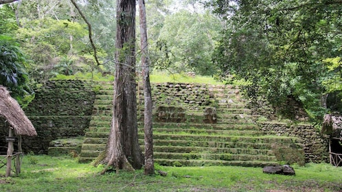 Overgrown steps of a pyramid in Uaxactun