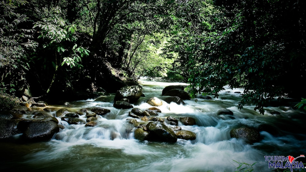Show item 5 of 5. Lush trees and forest line the bank of a river at Templer's Park in Malaysia