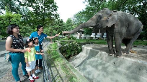 Family feeding elephant  at Kuala Lumpur National zoo