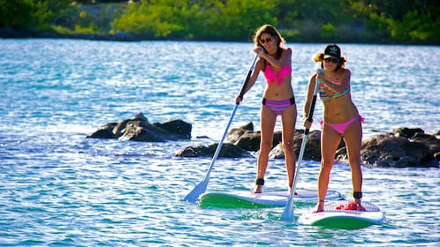 Paddle boarding in Cancun Mexico