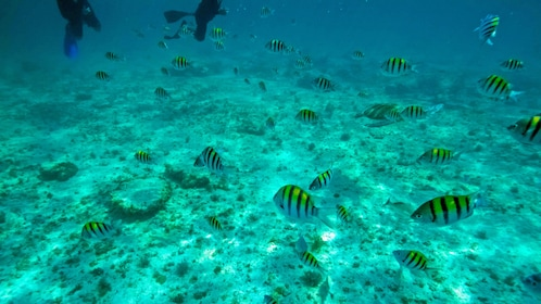 Snorkeling in Cancun Mexico