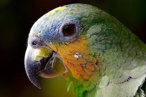 Nguerigne Bird Park