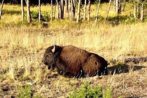 VIP Beartooth Highway / Yellowstone NP Guided Day Trip from Billings, Max o...