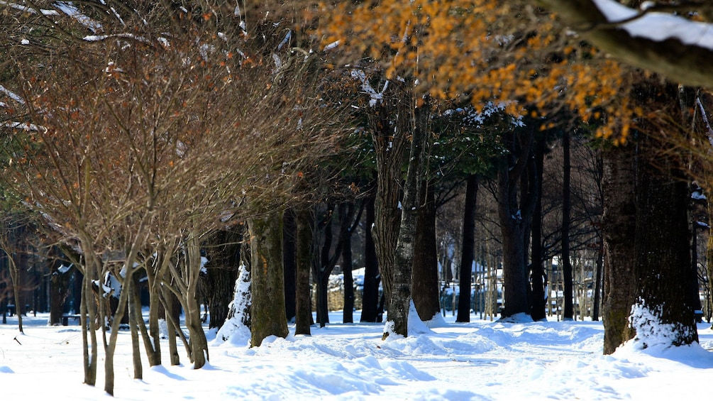 Show item 2 of 5. Nami Island during the winter
