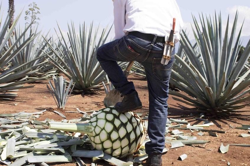 Cargar foto 3 de 8. Tequila with Distillery Tour