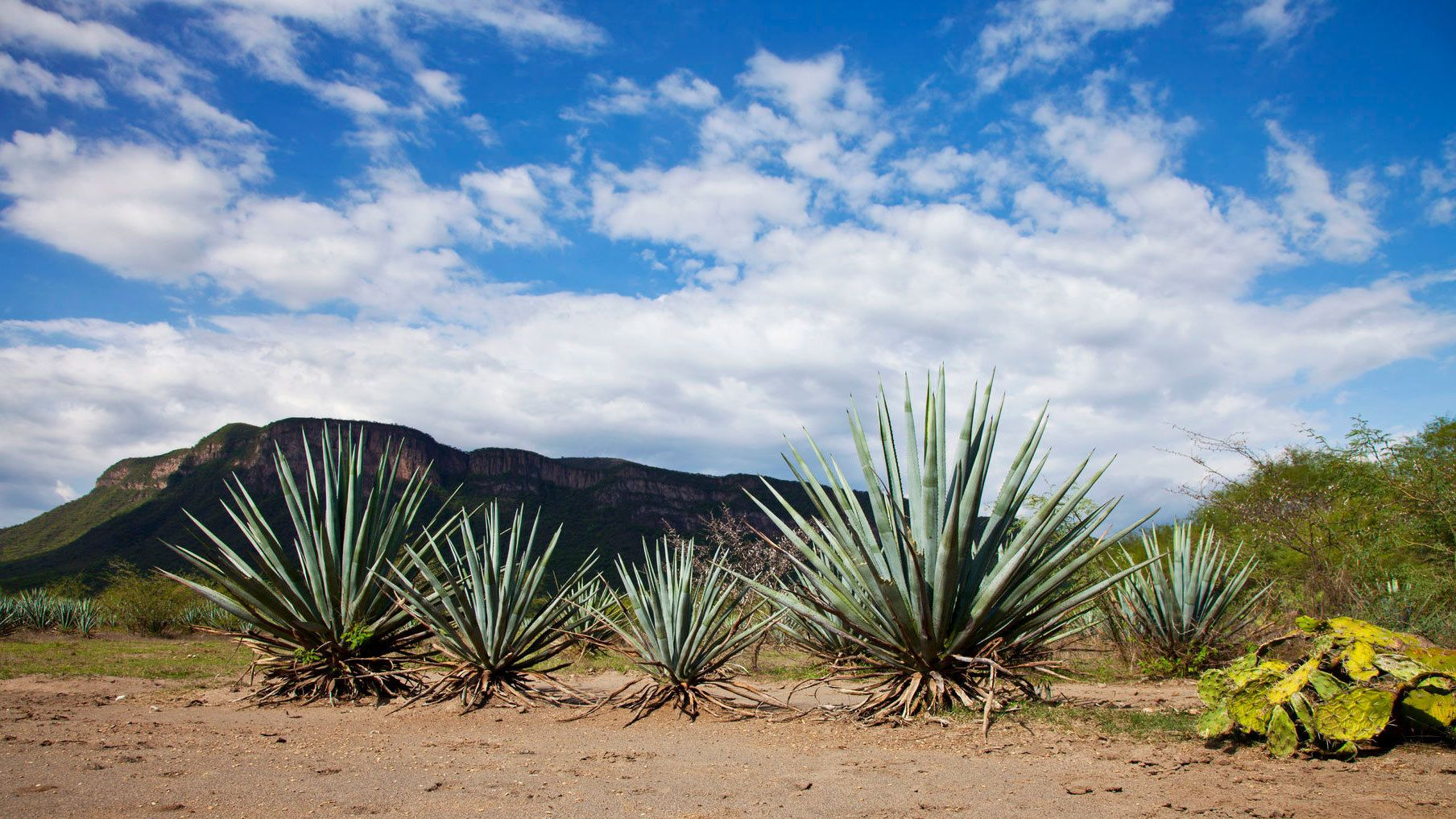Tequila with Distillery Tour