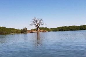 a day on the island of saloum